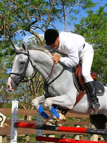 The Dominican Republic Horses The Paso Fino