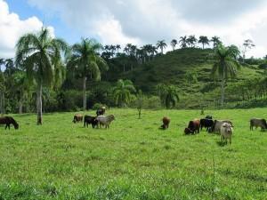 Unique Cabrera ranch for sale