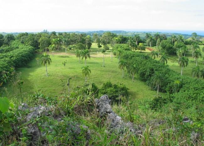 Cabrera - DOM (photo 1)