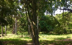 Cabarete Farmland - Dominican Republic