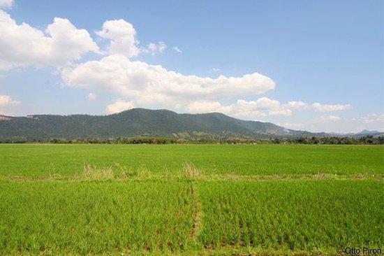 Rice flelds, Santiago, Dominican Republic