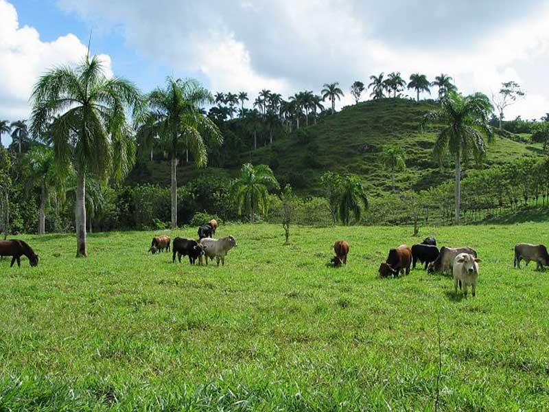 dominican republic ranch for sale cabrera