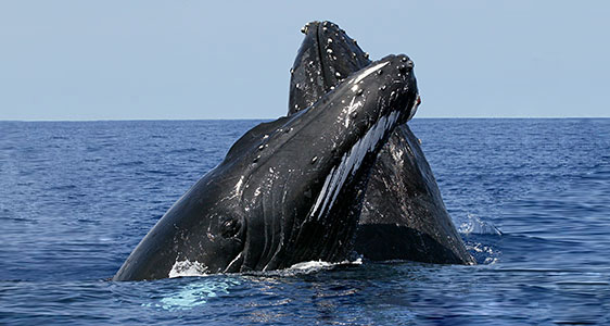 whaleswatching