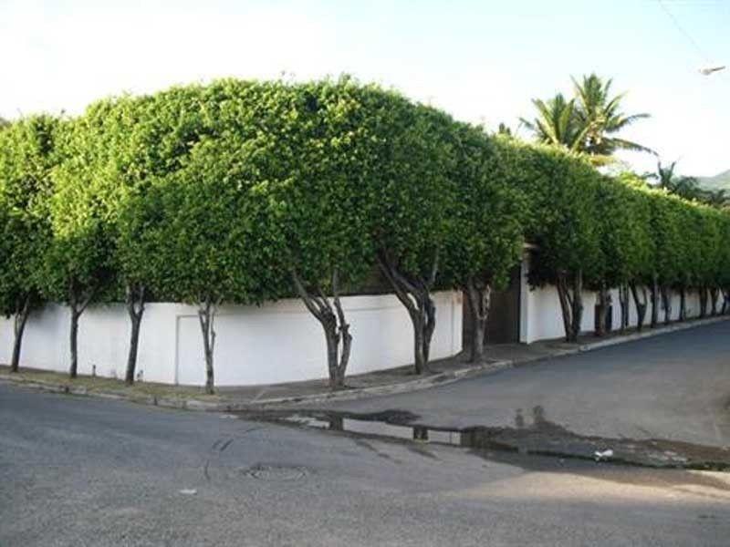 Puerto-plata - DOM (photo 1)