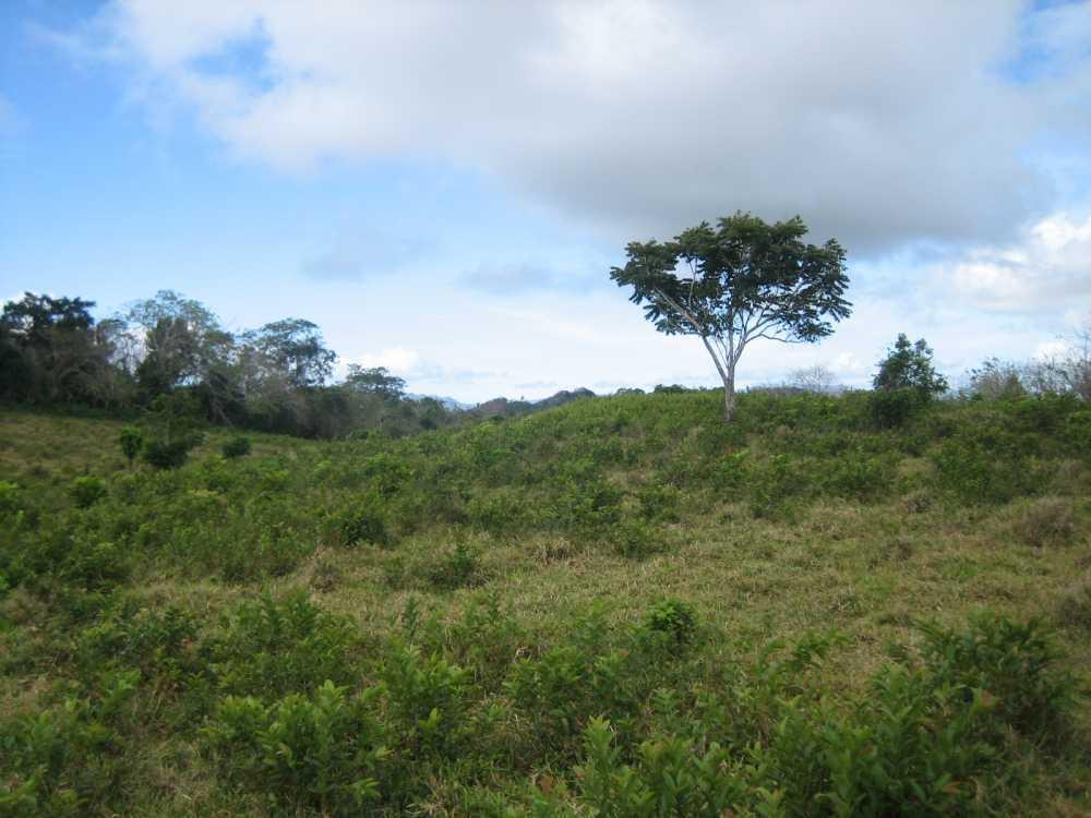 Farm Land For Sale in Puerto Plata | Dominican Republic Real Estate