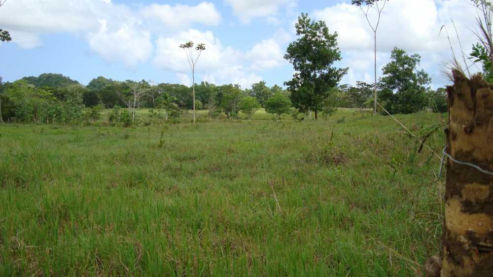 Cattle farm in Rio San Juan for sale - Dominican Republic