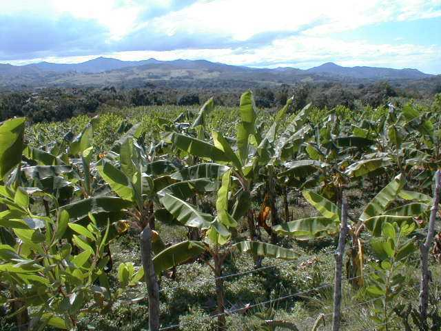 Acacia tree farm in Rio San Juan for sale, Dominican Republic