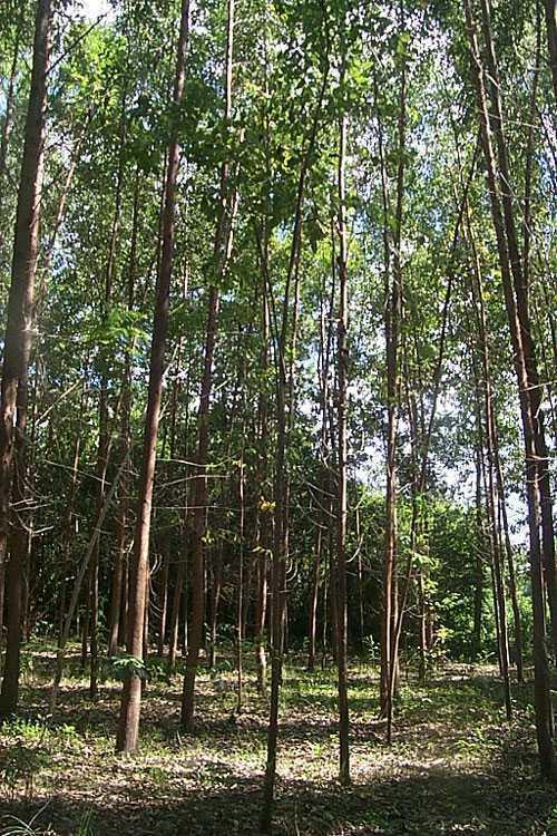 Acacia Tree Farm, Dominican Republic