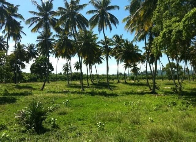Dominican Republic Beachfront Property