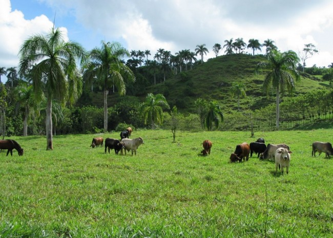 Caribbean Farmland, Dominican Republic