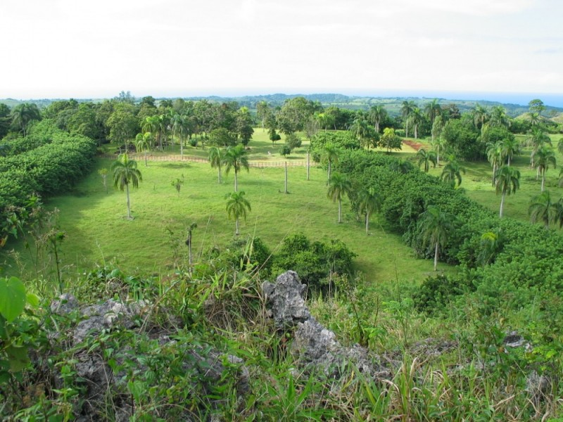 Amazing Caribbean Farm For Sale In Cabrera Dominican Republic