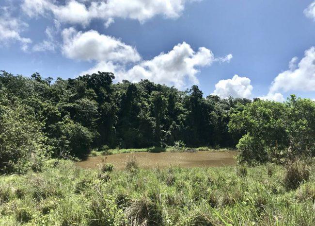 Caribbean Farmland, Dominican Republic
