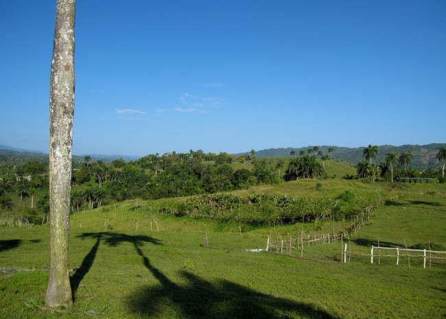 Organic Farm for Sale on the North Coast of the Dominican Republic