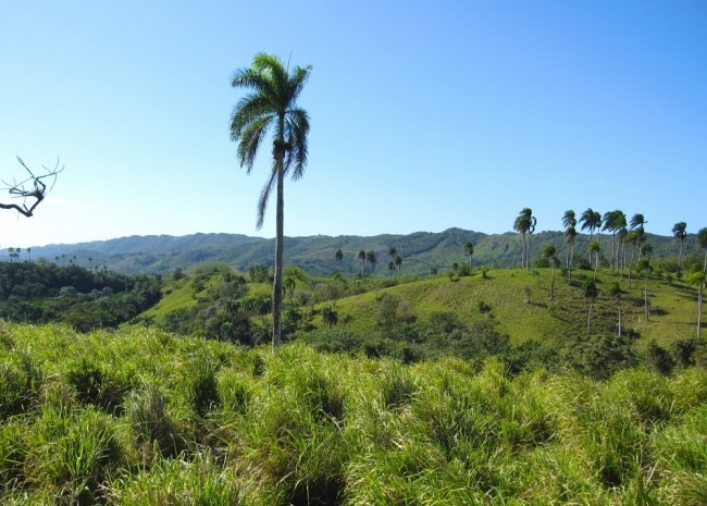 Farm for Sale, Jamao al Norte, Dominican Republic