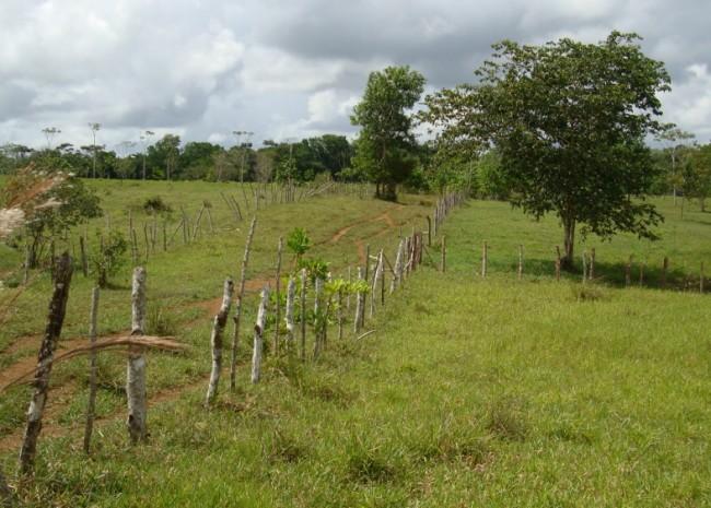 Cattle Farm-Rio San Juan-For Sale - Dominican Republic