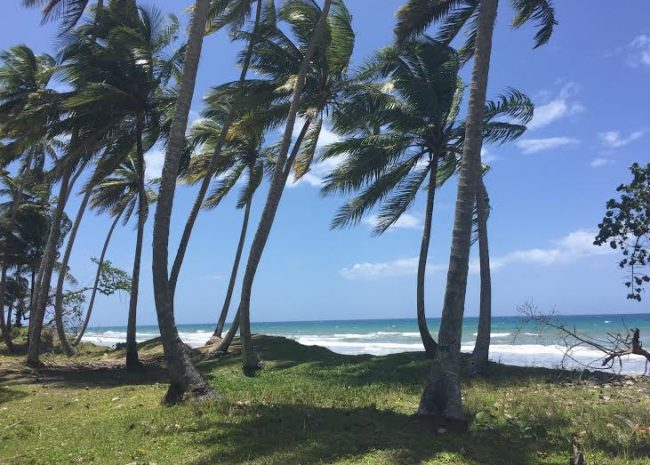 Las-canas - DOM (photo 1)
