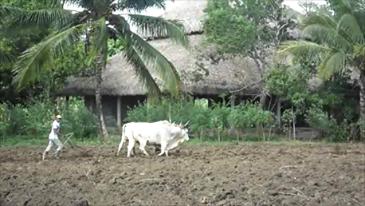 Sabaneta Organic Farm, Dominican Republic