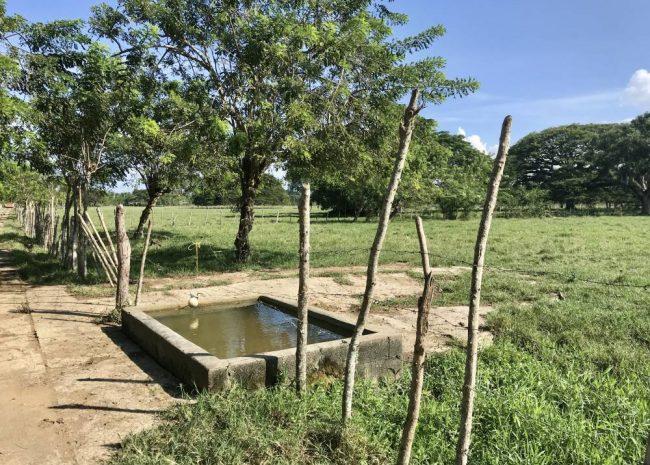 Dominican Republic Cattle Farm, Sabaneta, Cabarete, DR