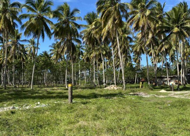 Beachfront Properties, Rio San Juan, Dominican Republic